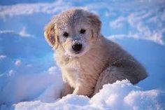 Résultats de recherche d'images pour «bébé chien trop mignon»