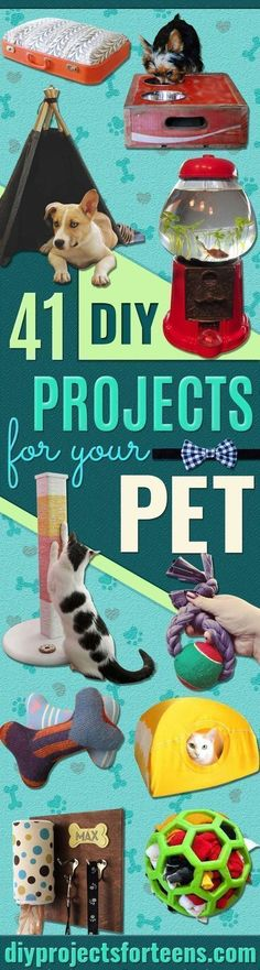 DIY Projects for Your Pet -Cat and Dog Beds, Treats, Collars and Easy Crafts to Make for Toys - Homemade Dog Biscuits, Food and Treats - Fun Ideas for Teen, Tweens and Adults to Make for Pets http://diyprojectsforteens.com/diy-projects-pets #catsdiytoy #cattoystomake #dogdiyprojects #dogdiybed #dogbeds #dogdiyideas #dogfood #cattoysdiy #cattoysideas