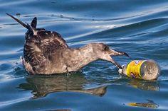 Basura flotando en el agua, una amenaza para los animales.