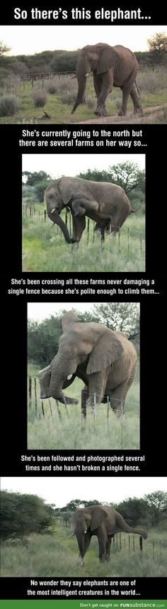 Good guy elephant