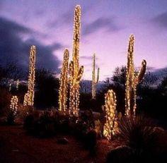 Desert Christmas!