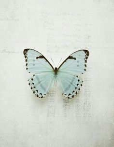 butterfly, blue, and pale image