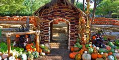 """Dallas Arboretum Pumpkin Patch   Named one of """"The Best Fall Festivals"""" – Country Living, 2015"""