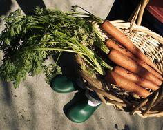 Syödään sesongin mukaan. Carrots, Good Food, Coffee, Vegetables, Coffee Cafe, Kaffee, Veggies, Vegetable Recipes, Healthy Meals