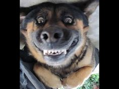 funny dog videos - try not to laugh or grin HD - http://positivelifemagazine.com/funny-dog-videos-try-not-to-laugh-or-grin-hd/ http://img.youtube.com/vi/NQpUTs70YgA/0.jpg  funny dog videos try not to laugh or grin – Animal, funny dogs,funny dog videos,funny dog videos try not to laugh,funny dog videos try not to laugh or grin,funny … ***Get your free domain and free site builder*** Click to Surprise me! Please follow and like us:  var addthis_config =   u