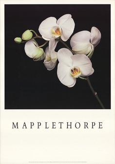 Robert Mapplethorpe Orchids Poster (1989) | AnOther Loves