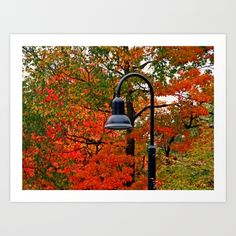 lightpost, light, toledo, ohio, botanical, garden, autumn, fall,