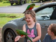 Great Ocean Road 2-Day Drive: 8 Places You Have To Stop www.parkmyvan.com.au #ParkMyVan #Australia #Travel #RoadTrip #Backpacking #VanHire #CaravanHire