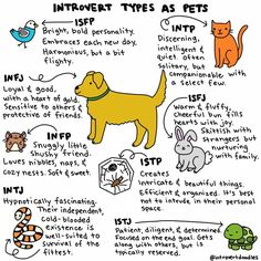 I'm Isfj sounds kind of like me but I think I'm Isfp or infp. Infp Personality Type, Infj Type, Myers Briggs Personality Types, Introvert Humor, Myers Briggs Personalities, 16 Personalities, Isfj, Infj Infp, Quotes Quotes
