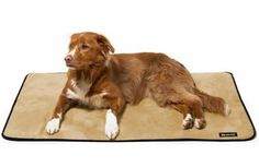 Big Shrimpy Pet Dog Landing Pad Kennel Crate Mat Medium Stone Suede -- Special dog product just for you. See it now! : Dog kennels