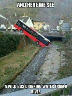 The wild bus.