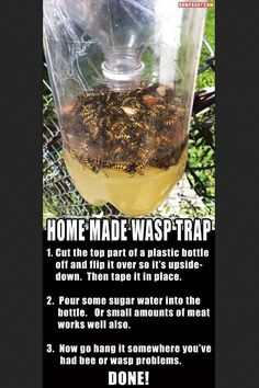 Homemade wasp catcher