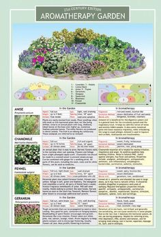 aromatherapy garden plans - that's kinda cool, they'd smell/look good :v