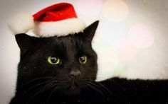Black cats look gorgeous any way their photographs are taken! Purry Xmas!