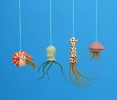 Mini Rainbow Spiraled Octopus Air Planter Window by CindySearles