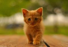 Photo Sweet Kitty :) by Muzaffer Gökkaya on 500px