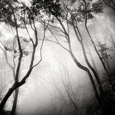 A obra do fotógrafo Josef Hoflehner na Galeria Chroma. Para receber o catálogo e mais informações: contato@galeriachroma.com.br
