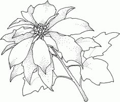 Poinsettia Coloring Pages Photos --> For the best adult coloring books and supplies including colored pencils, drawing markers, gel pens and watercolors, visit our website at http://ColoringToolkit.com. Color... Relax... Chill.