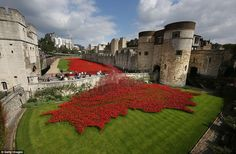 Red remembrance: The ceramic poppies have been planted at the Tower of London to commemora...