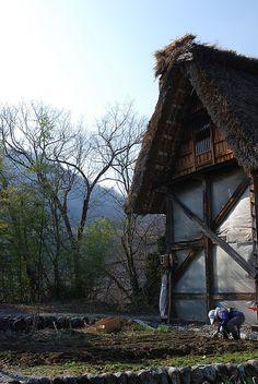 白川郷 Shirakawa-go village fields