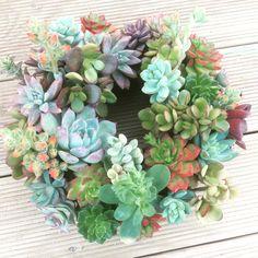 다육리스 succulent wreatgh