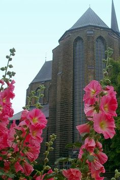 St. Mary's Church and hollyhocks.  Rostock, Germany.  Photo by Alan Osborn.