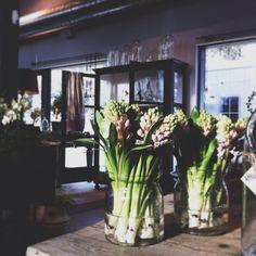 Hyacinths  I  Zetas Finsmakarens Trädgård