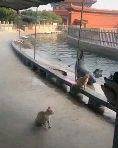 Cute Little Animals, Cute Funny Animals, Cute Cats, Big Cats, Cute Animal Videos, Cute Animal Pictures, Funny Animal Memes, Funny Cats, Cats Humor