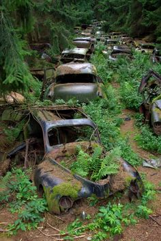Cimetieres de voitures, Chatillon, Belgique. Unfortunately the municipality ordered to clean up the forest; the cars are gone!