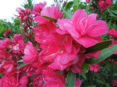 fleurs de mon pays