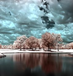 Have you seen trees photographed in infrared? Check out these amazing photographs from Steve Castle.