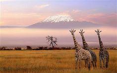 Image from http://i.telegraph.co.uk/multimedia/archive/01840/kilimanjaro_1840473b.jpg.
