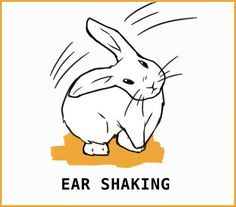 Rabbit Body Language: An Illustrated Guide Rabbit Run, Silly Rabbit, Pet Rabbit, Guinea Pig Toys, Guinea Pig Care, Guinea Pigs, Pet Bunny Rabbits, Bunnies, Rabbit Anatomy