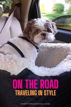 Traveling with your pets is easier than ever with a dog travel bag, car seat, or a pet carrier. Keep your dog comfy and styling in a super cute dog travel gear Best Small Dogs, Cute Small Dogs, Super Cute Dogs, Dog Friendly Accommodation, Dog Friendly Hotels, Pet Travel, Travel Bag, Travel Tips, Collapsible Dog Crate