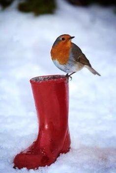 Winter Moment's