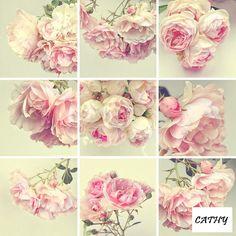 Gallery.ru / Фото #1 - photos de fleurs - florette