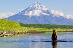 Bear in Kamchatka