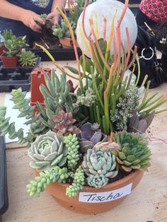 My succulent pot!
