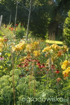 Pszczelarnia - strona 1728 - Forum ogrodnicze - Ogrodowisko