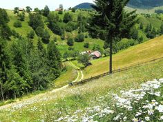 Romania Carpathian mountains romanian villages Bran eastern europe best natural landscapes