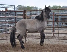 "4/12/2015 - We, the undersigned citizens, call on the Bureau of Land Management (BLM) to release the senior grulla stallion known as ""3907"" from the Sulphur Herd Management Area (HMA) in Utah back to the range.  - American Wild Horse Preservation Campaign"
