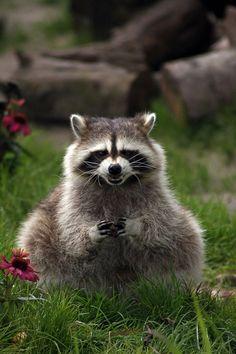 20-animais-que-estão-prestes-a-elaborar-um-plano-maligno-Blog-Animal-5