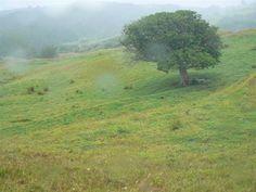 Hokianga bare land Landing, Sustainability, Country Roads, Sustainable Development