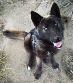 1000+ images about Dog I want! on Pinterest | Irish ...
