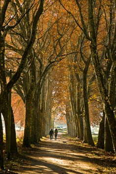 A Walk in the Woods, Lake Annecy in France