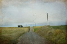 The long road home by Cat Girl 007, via Flickr
