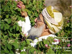 Roses collection - Oman