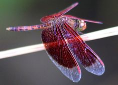 The Dragonfly and its Symbolic Meaning