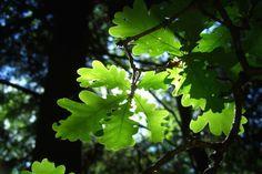 """""""Alors que les plantes produisent naturellement des calories à partir du soleil par la photosynthèse, la pousse des plantes industrielles nécessite l'emploi d'engrais, de pesticides et de tracteurs qui consomment une grande quantité de pétrole""""... http://www.reporterre.net/Pourquoi-et-comment-cultiver-un-jardin-sans-petrole"""