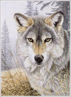 wolfs are awsome  /\                                 |                                 |           cavans face   |